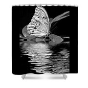 White Butterfly Bw Shower Curtain