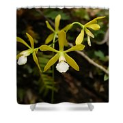 White Butterfly Orchid Shower Curtain