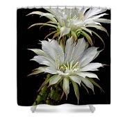 White Cactus Flowers Shower Curtain