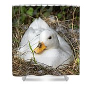 White Call Duck Sitting On Eggs In Her Nest Shower Curtain