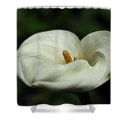 White Calla Lilly  Shower Curtain
