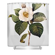 White Camellia Shower Curtain by Granger