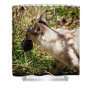 White Cat On The Hunt  Shower Curtain