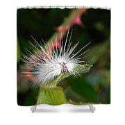 White Caterpillar  Shower Curtain