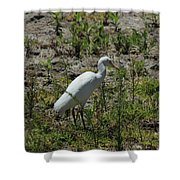 White Cattle Egret Shower Curtain