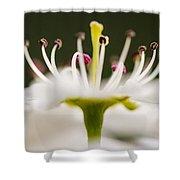 White Cherry Blossom Against Green Shower Curtain