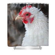 White Chicken Shower Curtain