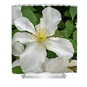 White Clematis 0808 Shower Curtain