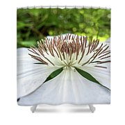 White Clematis Flower Garden 50146 Shower Curtain
