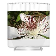 White Clematis Henryi Shower Curtain