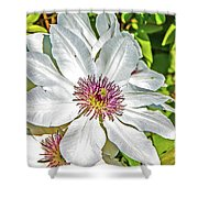 White Clematis Yellow And Purple Throat Shower Curtain
