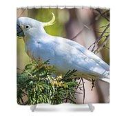White Cockatoo Shower Curtain