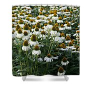 White Coneflower Field Shower Curtain