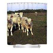 White Cows Shower Curtain