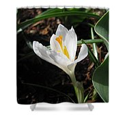 White Crocus Shower Curtain