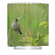 White Crown Sparrow Shower Curtain