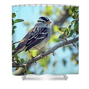 White-crowned Sparrow 0033-111017-1cr Shower Curtain