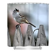 White-crowned Sparrow 2 Shower Curtain