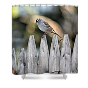 White-crowned Sparrow 3 Shower Curtain