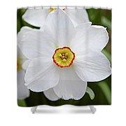 White Daffodil Shower Curtain