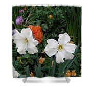 White Daffodills Shower Curtain