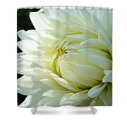 White Dahlia Flower Art Print Canvas Floral Dahlias Baslee Troutman Shower Curtain