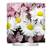 White Daisies Flowers Art Prints Spring Pink Blossoms Baslee Shower Curtain