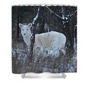 White Deer In Winter Shower Curtain