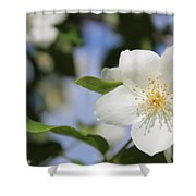 White Dogwood Shower Curtain