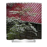 White Dogwood In The Rain Shower Curtain