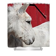 White Donkey, Red Barn Shower Curtain