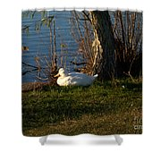 White Duck Resting Shower Curtain