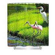 White Egret And Roseate Spoonbills Shower Curtain