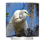 White Egret Shower Curtain