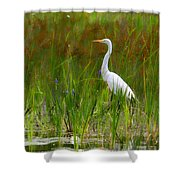 White Egret In Waiting Shower Curtain