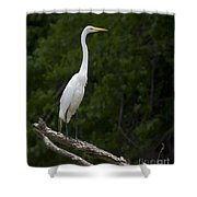 White Egret-signed-#0493 Shower Curtain