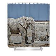 White Elephants Shower Curtain