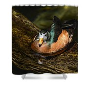 White-faced Whistling Duck  Shower Curtain