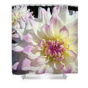 White Floral Art Bright Dahlia Flowers Baslee Troutman Shower Curtain