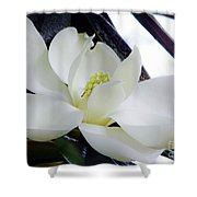 White - Florida - Beauty Shower Curtain