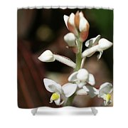 White Flower Buds Shower Curtain