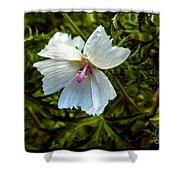 White Flower Shower Curtain
