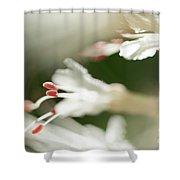 White Bottlebrush Buckeye Shower Curtain
