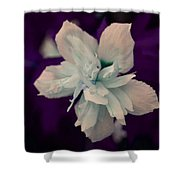 White Flower W/purple Background Shower Curtain