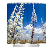 White Flowering Sea Squill On A Blue Sky Shower Curtain