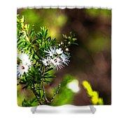 White Flowers Of Kunzea Ambigua Shower Curtain