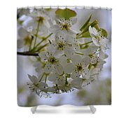 White Flowers On A Tree Shower Curtain