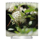 White Flowers On Canvas Shower Curtain