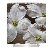 Dogwood White Flowers On Stones Shower Curtain
