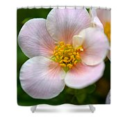 White Flowers With Pink And Yellow Shower Curtain
